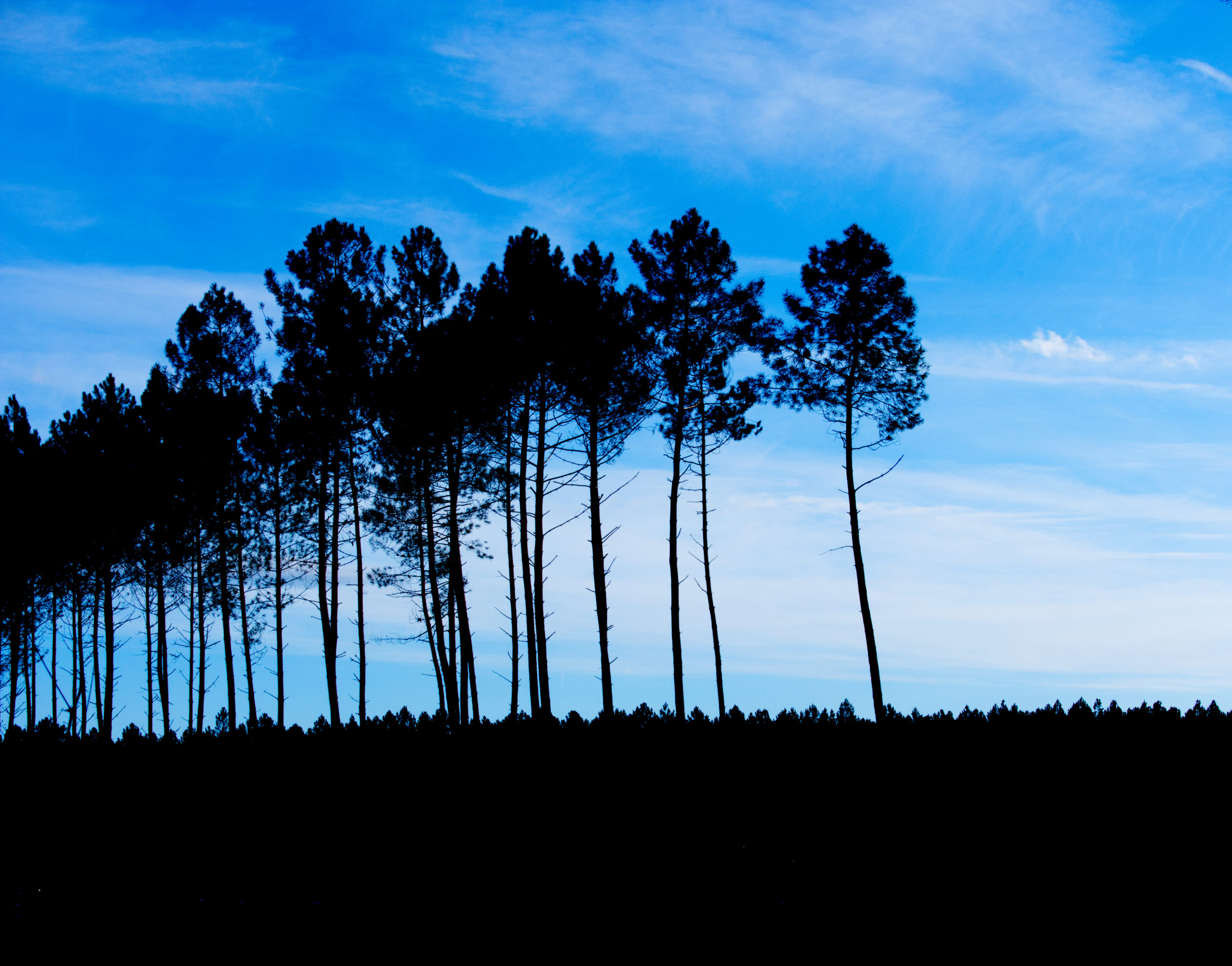 un arbre dans ma vie bleu