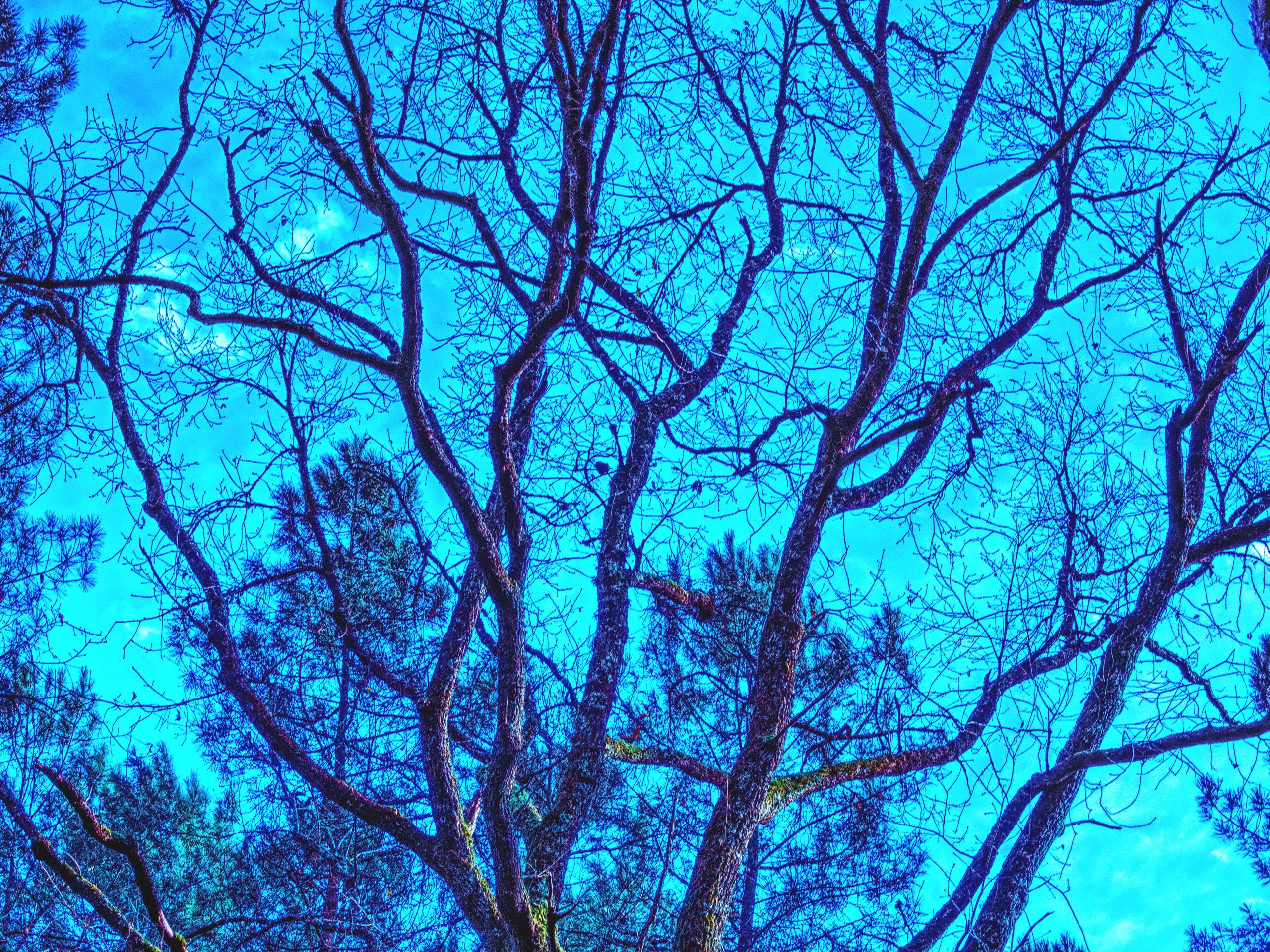 un-arbredans-mavie-bleu
