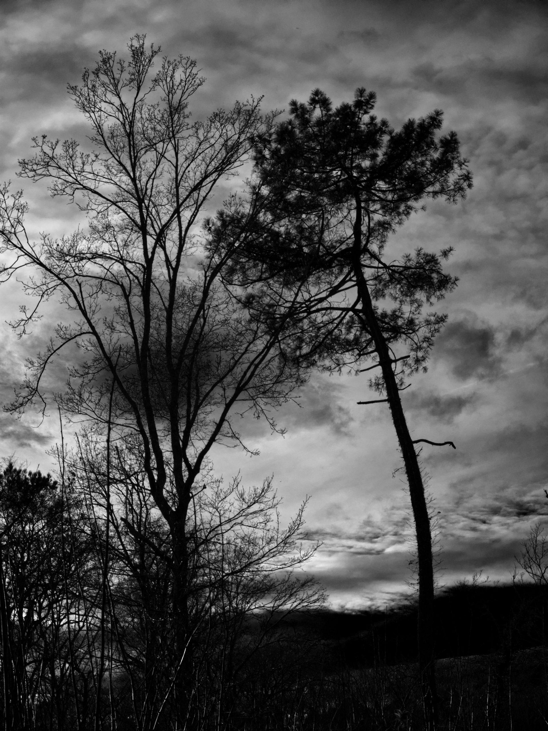 un arbre dans ma vie.nb